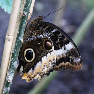 Butterflies ZSL London Zoo - Rachel Oates