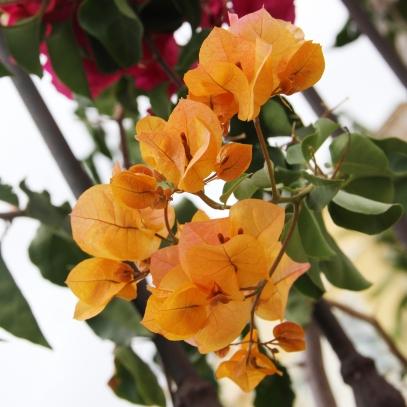 Gran Canaria - Rachel Oates